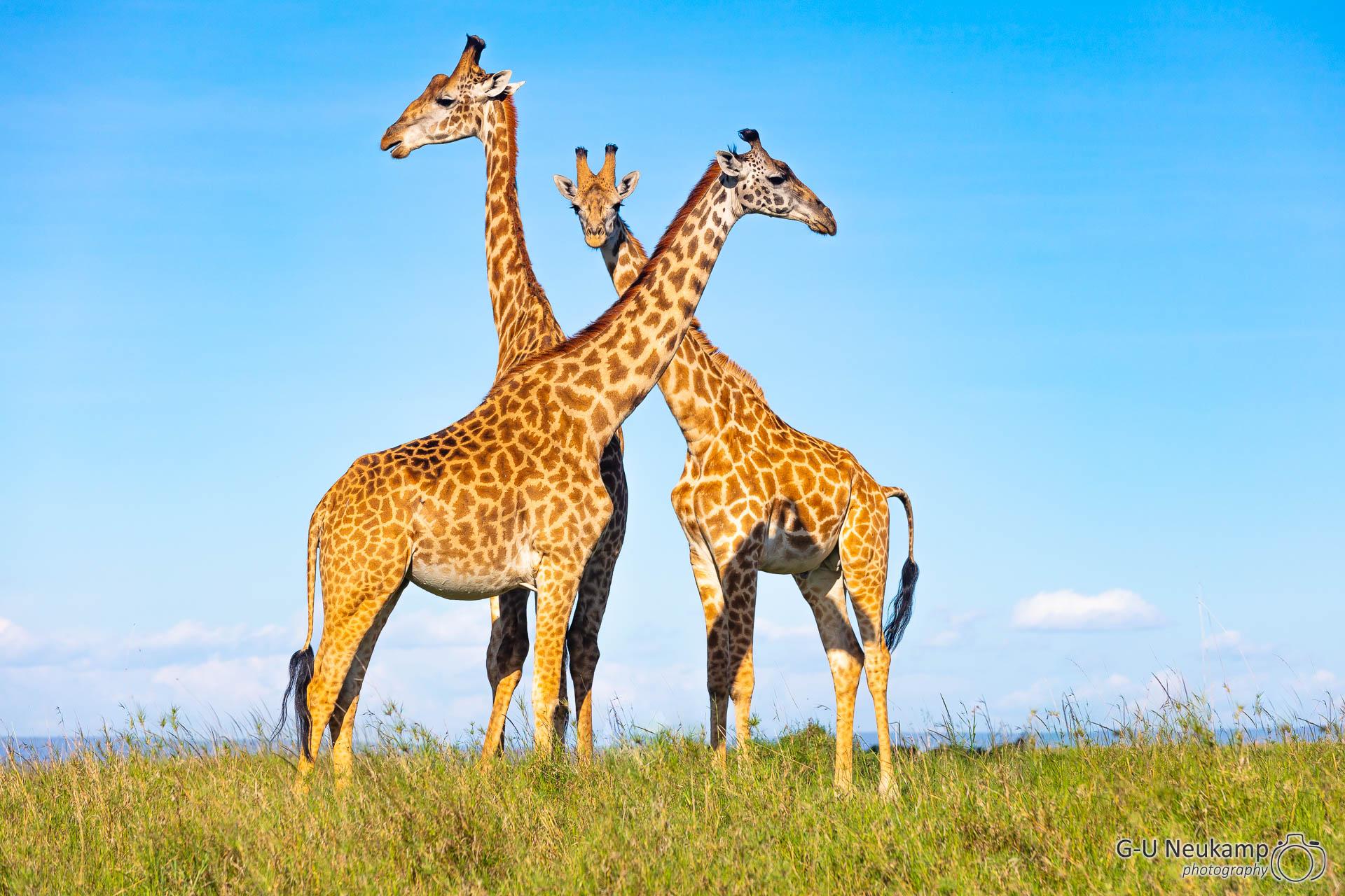 ,Kenia