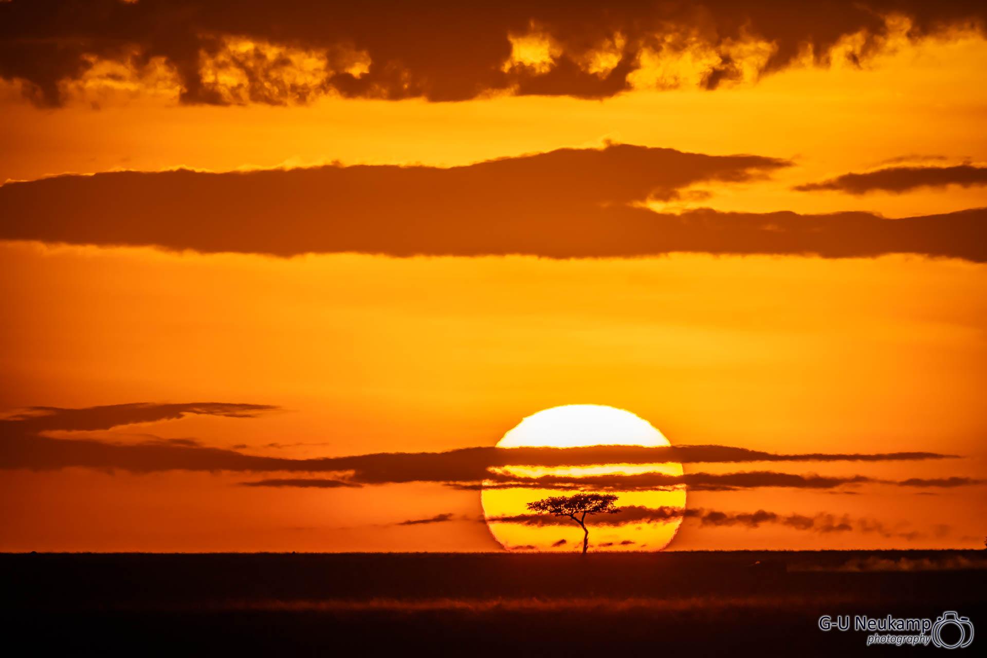 Ferne Akazie vor untergehender Sonnenscheibe 3