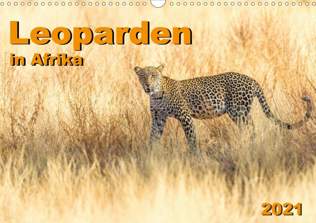 Leoparden-in-Afrika.jpg