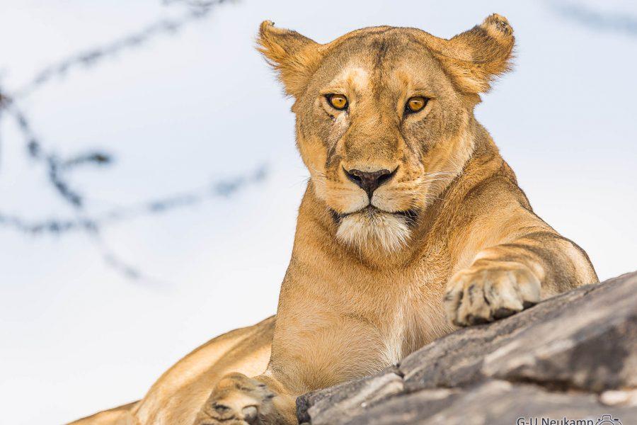 Serengeti,Tansania