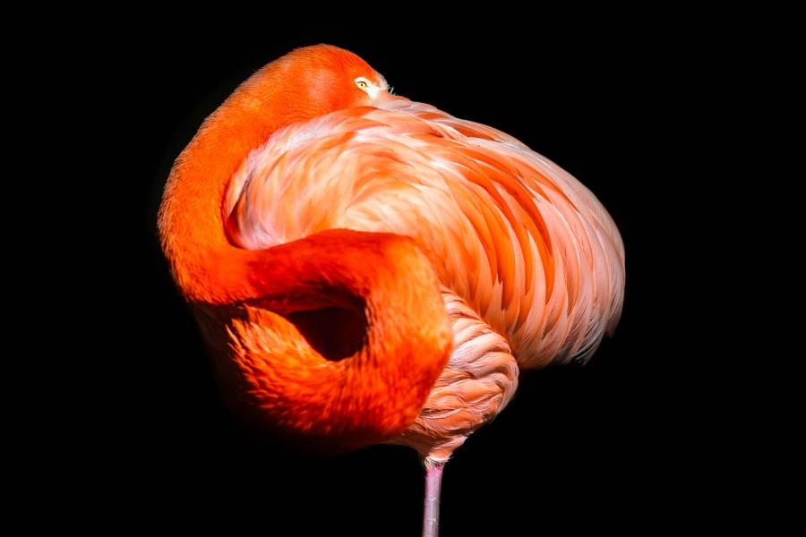 Flamingo on one leg stand